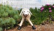 כבשה - עיסת נייר  - ניבה רוזנשוק