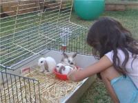 טיפול באמצעות בעלי חיים - סמינר הקיבוצים
